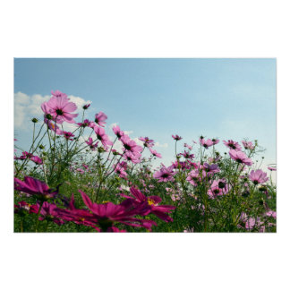 Cosmos Flowers of Japan Poster