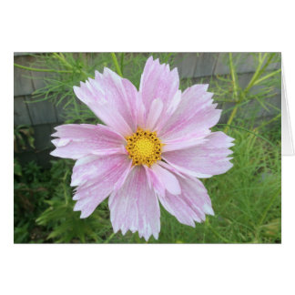 Cosmos - Pale Pink & Green --- Note Card