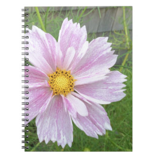 Cosmos - Pale Pink & Green --- Spiral Notebooks