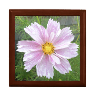 Cosmos - Palest of Pinks --- Large Square Gift Box