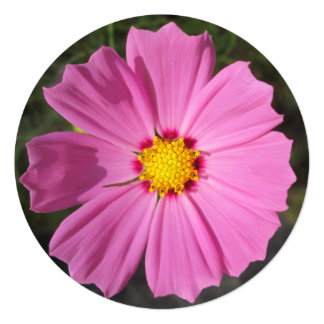 "Cosmos Pink Flower 5.25"" Square Invitation Card"
