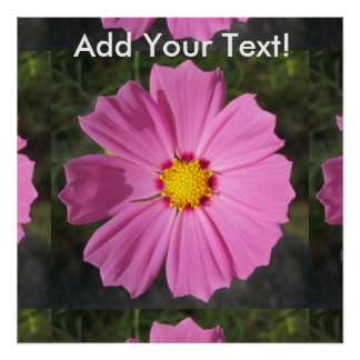 Cosmos Pink Flower Poster