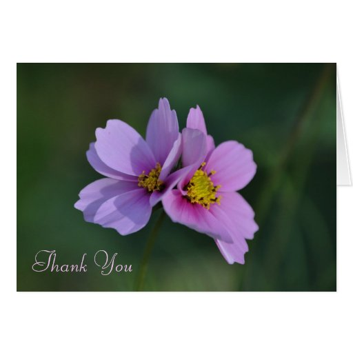 Cosmos Thank You Note Card