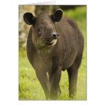 Costa Rica. Bairdis Tapir Tapirus bairdii) Greeting Card