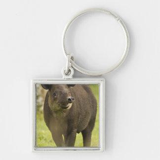 Costa Rica. Bairdis Tapir Tapirus bairdii) Key Chains