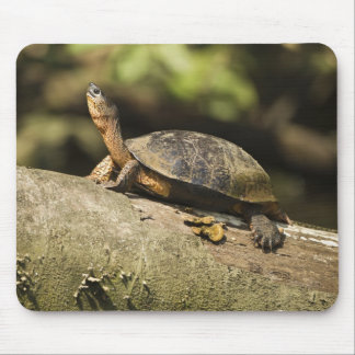 Costa Rica. Black Wood Turtle Rhinoclemmys Mouse Pad