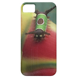 Costa Rica, Close-up of Caterpillar on Heliconia iPhone 5 Cover