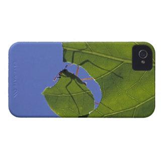 Costa Rica, Leaf cutter ants, Atta cephalotes Case-Mate iPhone 4 Cases