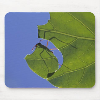 Costa Rica, Leaf cutter ants, Atta cephalotes Mouse Pad