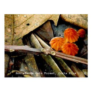 Costa Rica Monteverde Rainforest Postcard