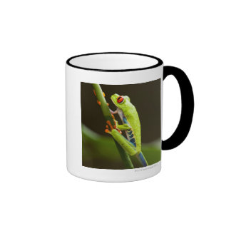 Costa Rica, Monteverde, Red-Eyed Tree Frog Ringer Coffee Mug