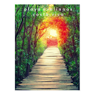 Costa Rica Playa Avellanas Mangrove Postcard