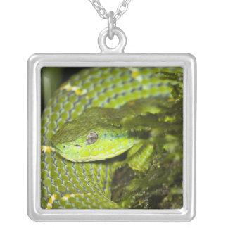 Costa Rica. Striped Palm Viper Bothriechis Custom Necklace