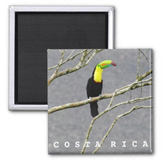 Costa Rica Toucan Souvenir Magnet