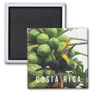 Costa Rica Tropical Toucan Souvenir Magnet
