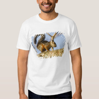 Costa Rica. Variegated squirrel Sciurus Tshirt