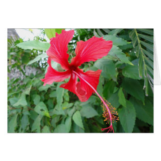 Costa Rican Beautiful Flora Card