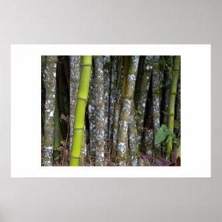 Costa Rican Rainforest Bamboo Art Poster