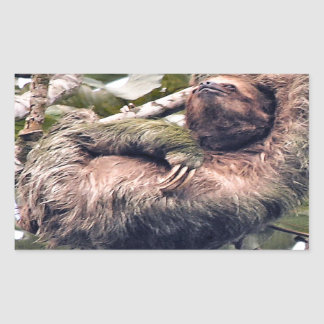 Costa Rican sloth Rectangular Sticker