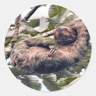 Costa. Rican sloth Round Sticker