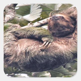 Costa Rican sloth Square Sticker