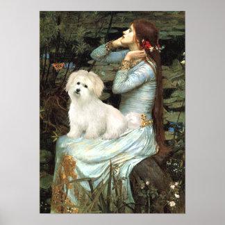 Coton de Tulear 7 - Ophelia Seated Poster