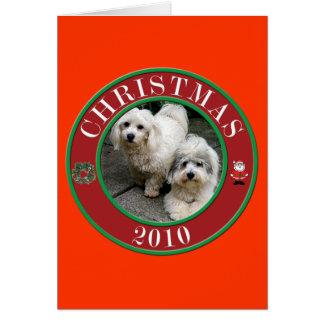 Coton De Tulear at Christmas Card