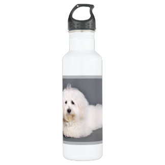 Coton de Tulear - Joci 710 Ml Water Bottle