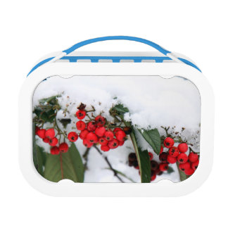 Cotoneaster Fruits with a Snow Hat Lunchboxes