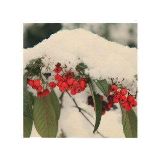 Cotoneaster Fruits with a Snow Hat Wood Canvas