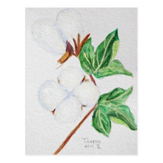 Cotton Boll Botanical Postcard White