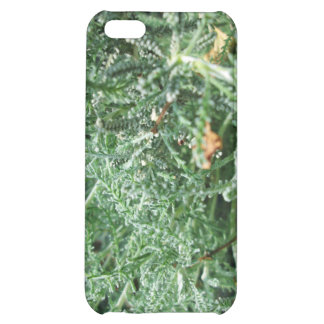 Cotton Lavender Cover For iPhone 5C