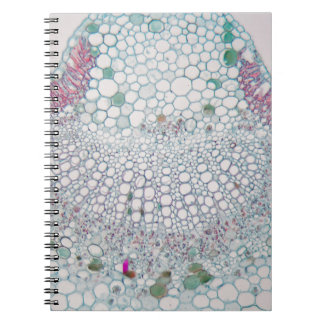 Cotton leaf under the microscope notebooks
