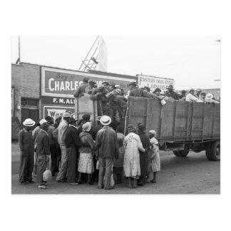 Cotton Pickers, 1938 Postcard