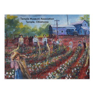 Cotton Pickin' in Oklahoma Post Card