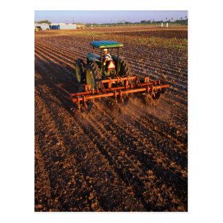 Cotton test field postcard