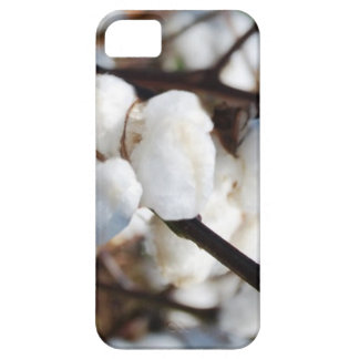 Cotton  the flower for 2nd anniversary iPhone 5 cover