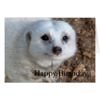 Cotton The White Meerkat, Birthday Card