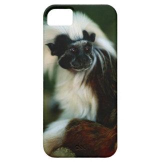 Cotton top tamarin (Saguinus oedipus) sitting, Case For The iPhone 5