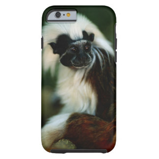 Cotton top tamarin (Saguinus oedipus) sitting, Tough iPhone 6 Case
