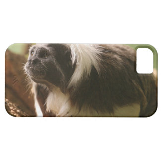 Cotton Topped Tamarin Monkey iPhone 5 Covers