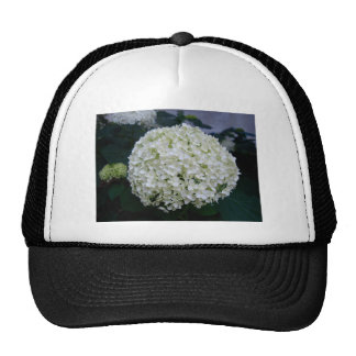 Cottonball Hydrangea Cap