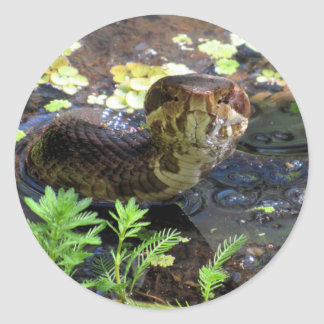 Cottonmouth / Water Moccasin / Snake  Stickers