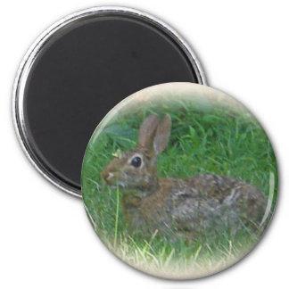 Cottontail Bunny Rabbit Cordinating Items Fridge Magnet