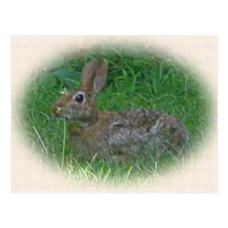 Cottontail Bunny Rabbit Cordinating Items Postcards