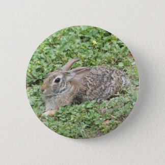 Cottontail rabbit 6 cm round badge