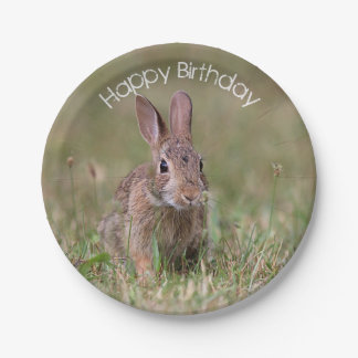 Cottontail Rabbit Paper Plate
