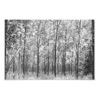 Cottonwood Grove Photo Art