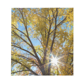 Cottonwood Sunshine Notepads