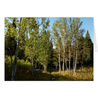Cottonwoods Along Moose Ponds Trail at Grand Teton Card